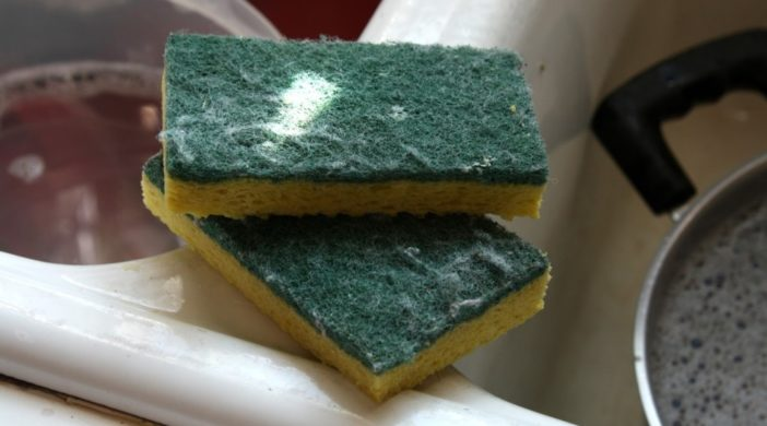 Your kitchen sponge has more pathogenic bacteria than your for Spong kitchen set 702
